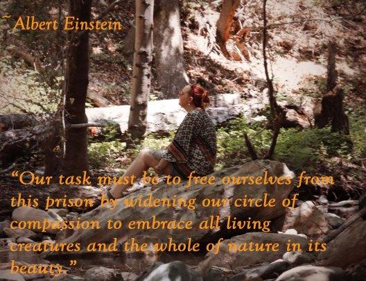 Albert Einstein__Meditation