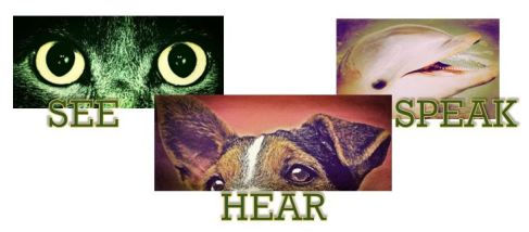 SEE_HEAR_SPEAK---Master Image_2